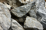 Free Stock Photo: Close-up of large rocks