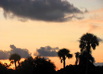 Free Stock Photo: A sunset with palm tree silhouettes