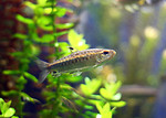 Free Stock Photo: Close-up of a small fish in the water