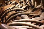 Free Stock Photo: Close-up of whale bones