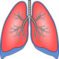 Free Stock Photo: Illustration of a pair of lungs
