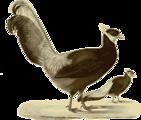 Free Stock Photo: Illustration of a bird