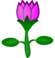 Free Stock Photo: Illustration of a pink lotus flower