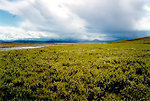 Free Stock Photo: A coastal arctic tundra