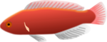 Free Stock Photo: Illustration of a red fish