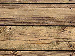 Free Stock Photo: Close-up of a wooden texture