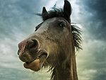 Free Stock Photo: Horse portrait