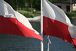 Free Stock Photo: Polish flags