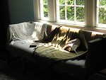 Free Stock Photo: A sofa with soft light from a window