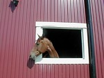 Free Stock Photo: Horse sticking its head out of barn window