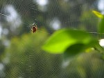 Free Stock Photo: A spider on a spiderweb