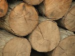 Free Stock Photo: Closeup of a pile of cut logs
