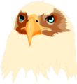 Free Stock Photo: Illustration of an eagle head