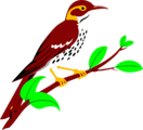 Free Stock Photo: Illustration of a brownish red thrush