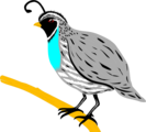 Free Stock Photo: Illustration of  a quail