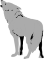 Free Stock Photo: Illustration of a coyote