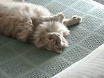 Free Stock Photo: Closeup of a light orange cat lying on its back