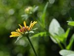 Free Stock Photo: Closeup of a yellow flower