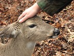 Free Stock Photo: A man petting a deer
