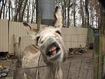 Free Stock Photo: A closeup of a donkey