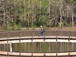 Free Stock Photo: A man walking across a bridge over a pond