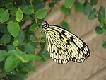 Free Stock Photo: Closeup of a yellow butterfly on a leaf