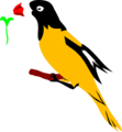 Free Stock Photo: Illustration of a yellow and black oriole