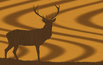 Free Stock Photo: An oak wood texture with a buck silhouette carved in