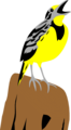Free Stock Photo: Illustration of a yellow meadowlark on a stump
