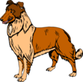 Free Stock Photo: Illustration of a collie dog