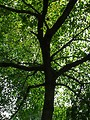 Free Stock Photo: A large tree