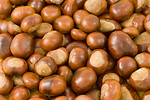 Free Stock Photo: Close-up of a pile of chestnuts