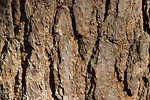 Free Stock Photo: Close-up of tree bark