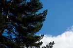 Free Stock Photo: A tree with a blue sky background