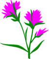 Free Stock Photo: Illustration of purple Indian Paintbrush flowers