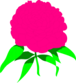 Free Stock Photo: Illustration of a pink peony flower