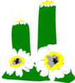 Free Stock Photo: Illustration of a cactus with white flowers