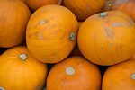 Free Stock Photo: A pile of pumpkins