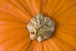 Free Stock Photo: Close-up of the top of a pumpkin