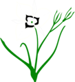 Free Stock Photo: Illustration of a white flower