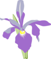 Free Stock Photo: Illustration of a purple orchid flower