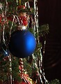 Free Stock Photo: A blue Christmas ornament on a tree