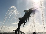 Free Stock Photo: The dolphin fountain at Bayfront Park in Sarasota, Florida