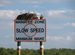 Free Stock Photo: An osprey nest on a speed warning sign in the ocean
