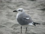 Free Stock Photo: Close-up of a seagull on the beach